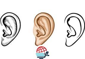 پاورپوینت احساس و ادراک بخش شنوایی